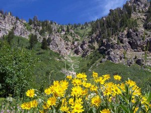 Wildflowers along the trail to Table Mountain, photographed July 15, 2006.
